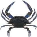 crabemu.png